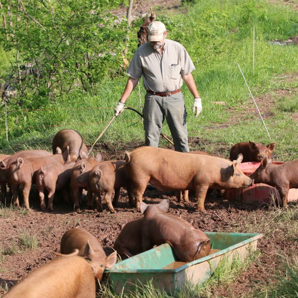 Owner and pigs at Woodland Ridge Farm